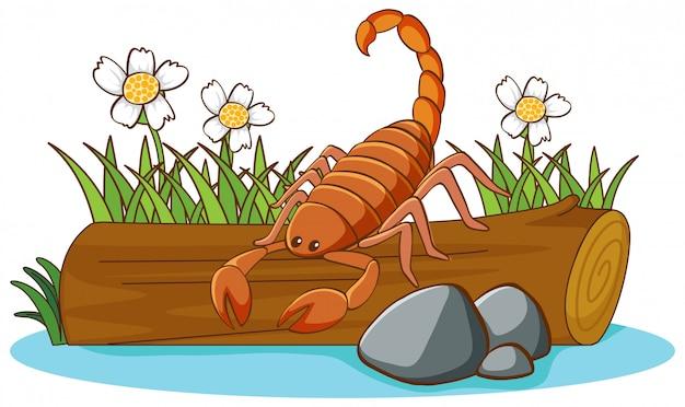 Иллюстрация скорпион на белом фоне Бесплатные векторы