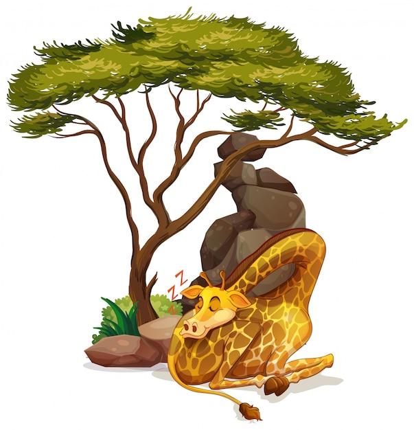 Изолированное изображение спать жирафа Бесплатные векторы