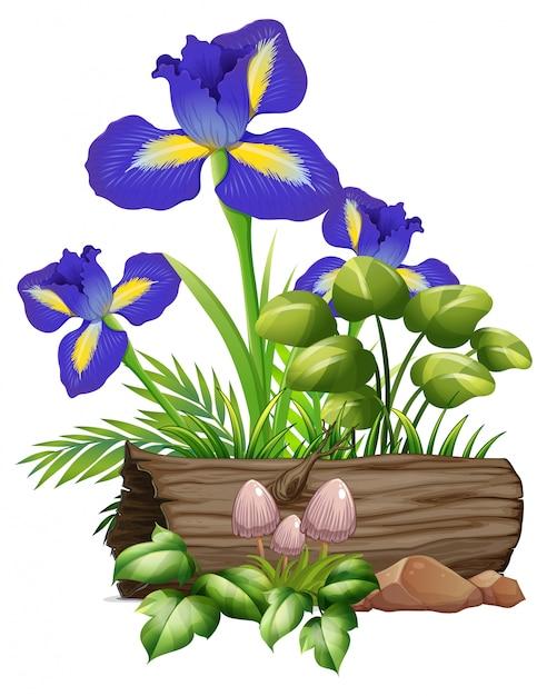 Ирис цветы и грибы на белом Бесплатные векторы
