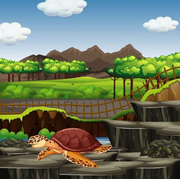 Сцена с морской черепахой в зоопарке Бесплатные векторы