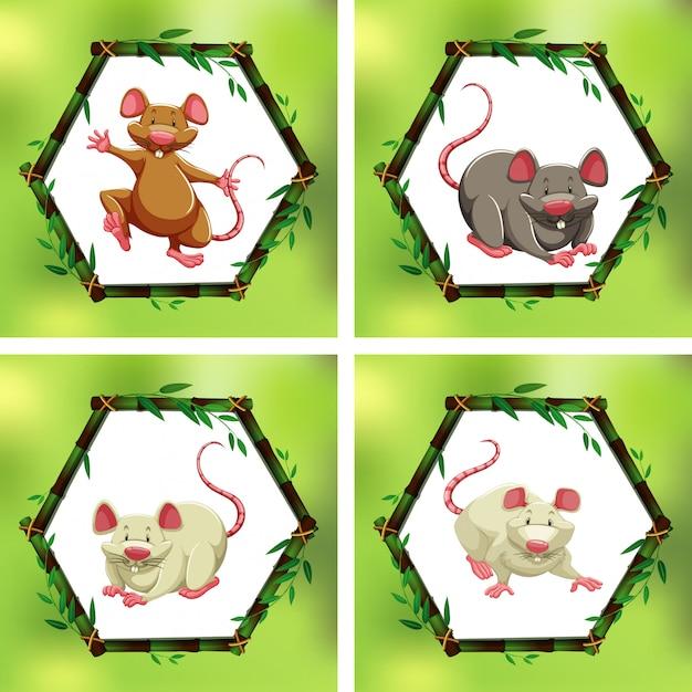 Четыре разных крысы в бамбуковых рамах Бесплатные векторы