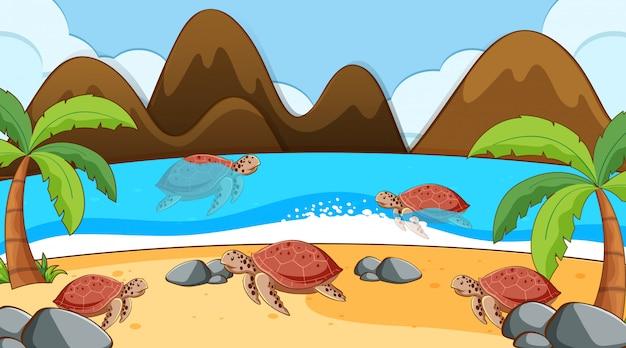 Сцена с купанием морских черепах в море Бесплатные векторы