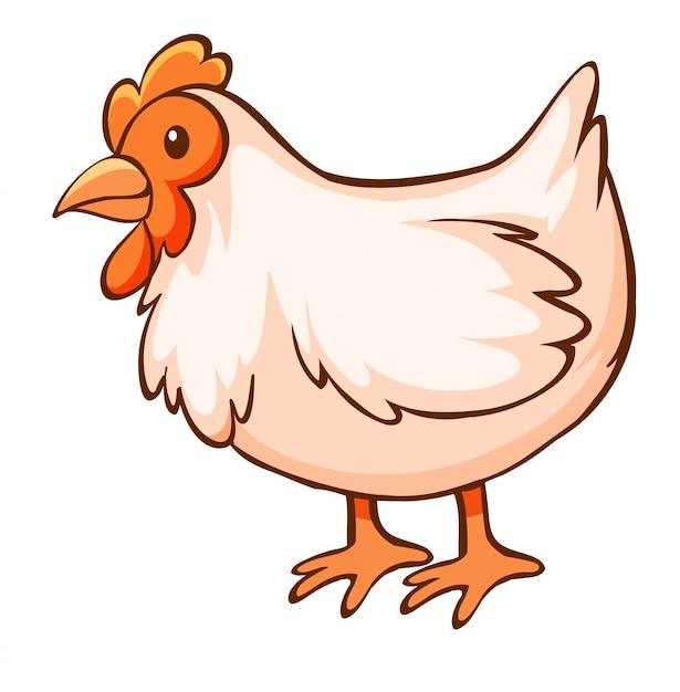 白い背景の上の鶏 無料ベクター