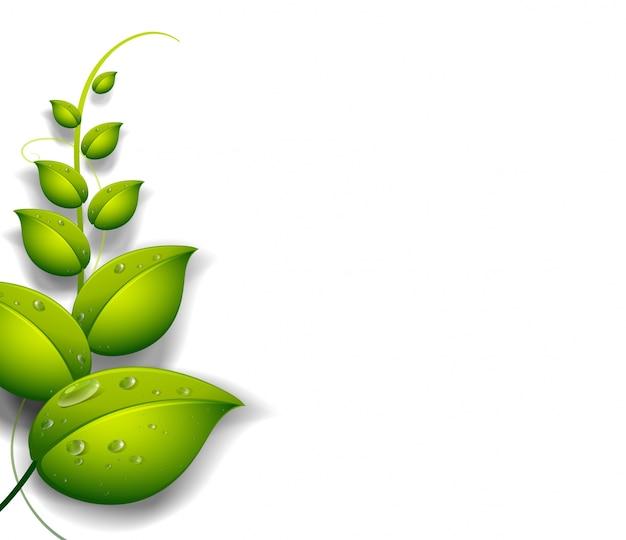 水滴を持つ緑の植物 無料ベクター