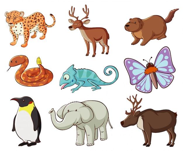 Большой набор дикой природы со многими видами животных и насекомых Бесплатные векторы