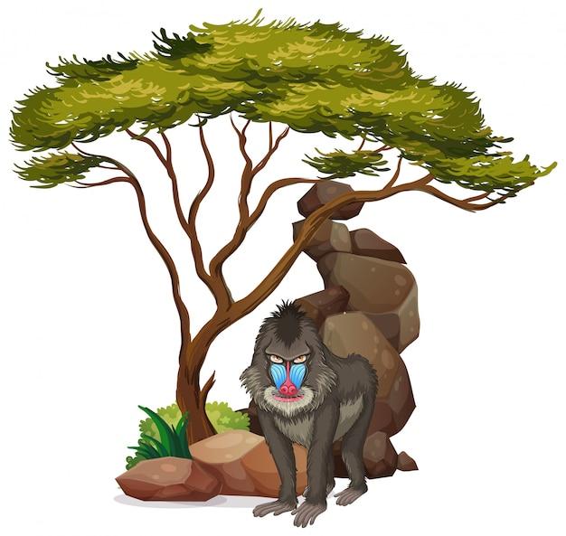 Изолированное изображение павиана под деревом Бесплатные векторы