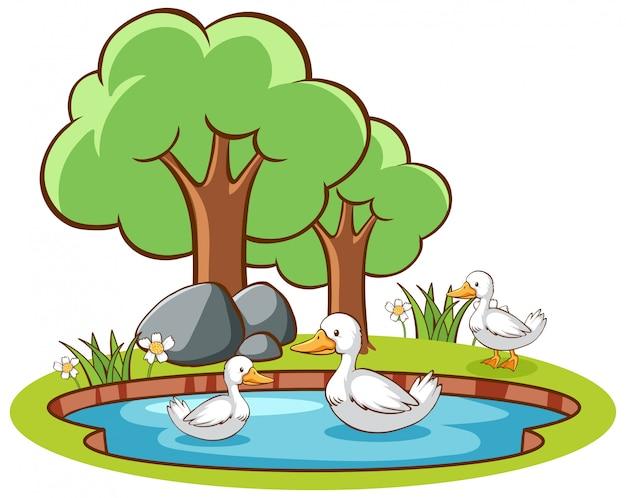 池のアヒルの分離画像 無料ベクター