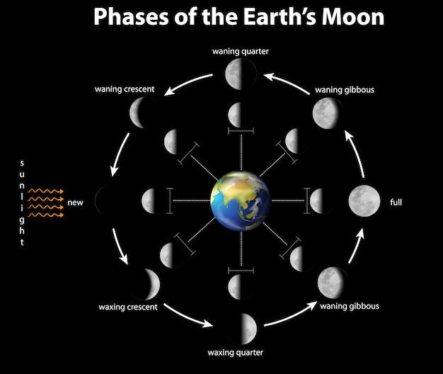 Диаграмма, показывающая фазы луны на земле Бесплатные векторы