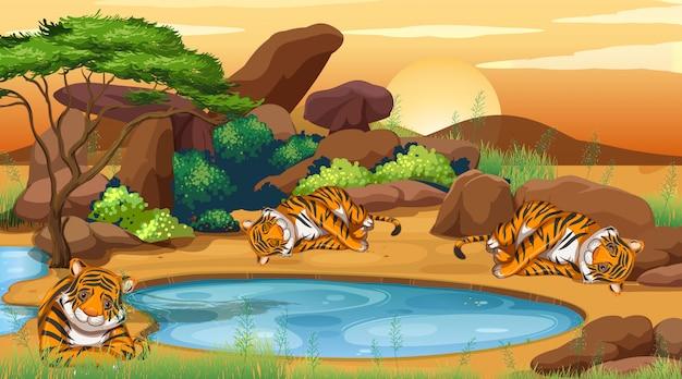池のそばのトラとのシーン 無料ベクター