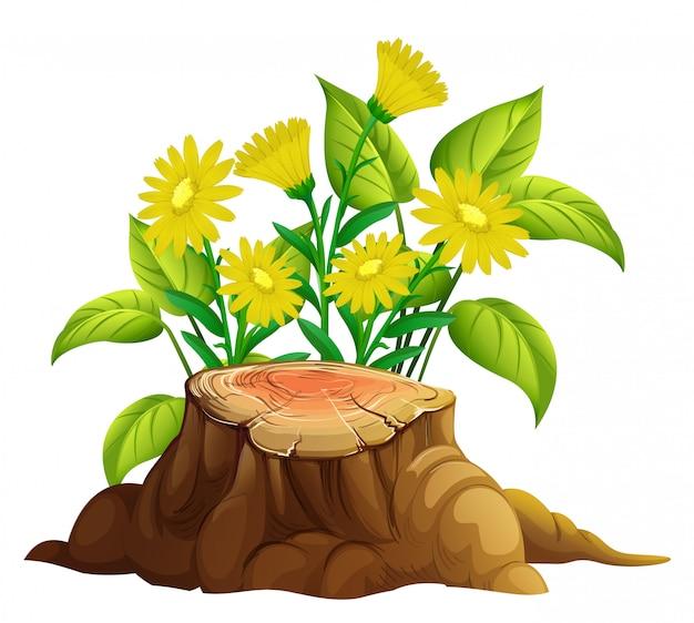 Желтые цветы герберы на белом Бесплатные векторы
