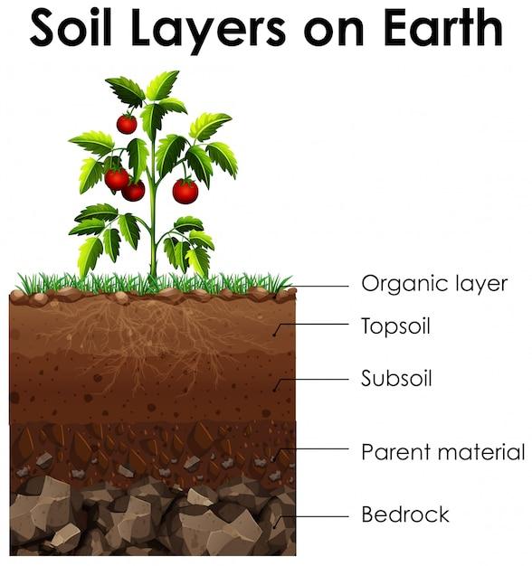 地球上の土壌層を示す図 無料ベクター