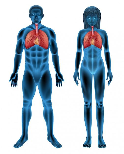 Дыхательная система человека Бесплатные векторы
