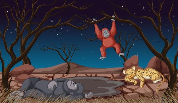 Сцена с животными в ночное время Бесплатные векторы