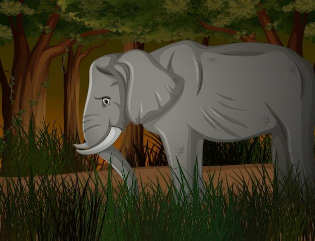 暗い森の細い象 無料ベクター