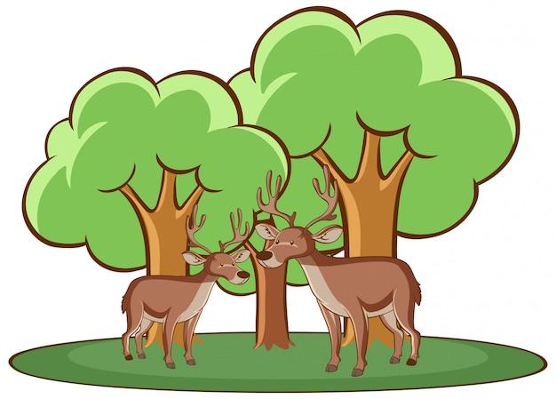 Изолированное изображение двух оленей Бесплатные векторы