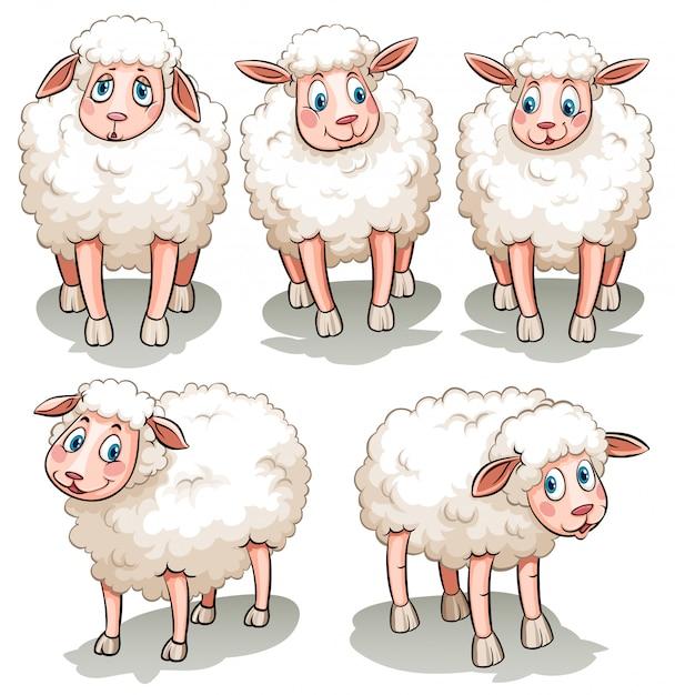 Пять белых овец Бесплатные векторы
