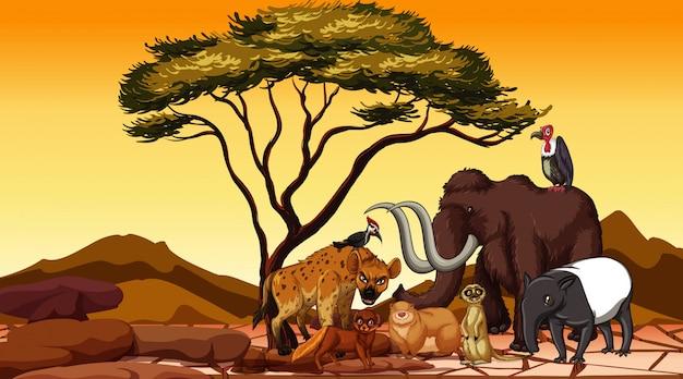 フィールドのアフリカの動物 無料ベクター