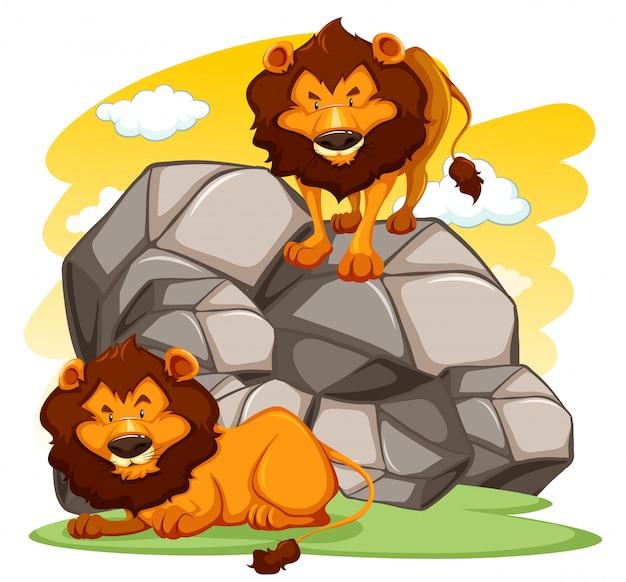 Мультфильм львы Бесплатные векторы