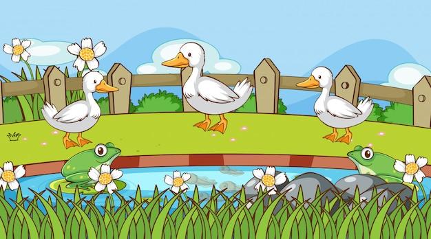 池のそばでアヒルとカエルのシーン 無料ベクター