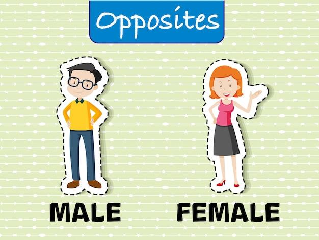 男性と女性の反対の言葉 無料ベクター