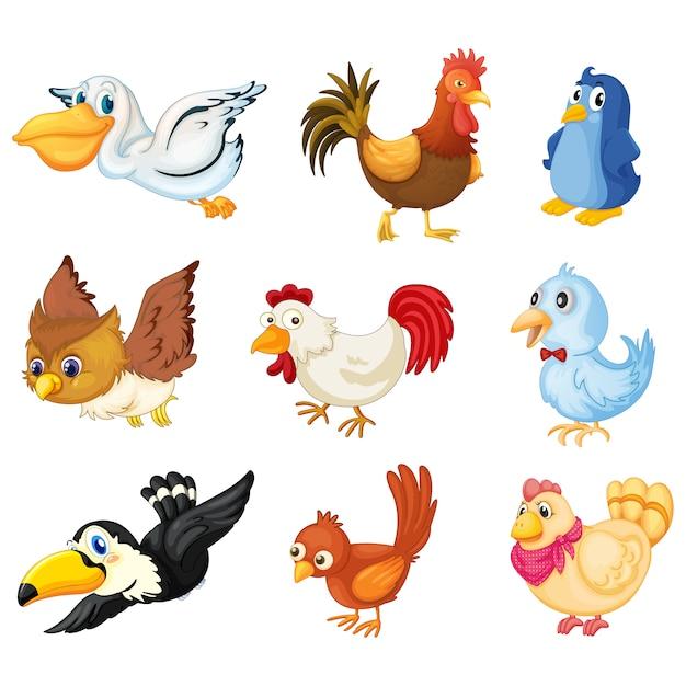 Коллекция цветное птиц Бесплатные векторы