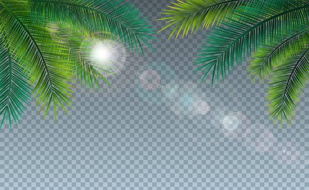 Летняя иллюстрация с тропическими пальмовых листьев на прозрачном Бесплатные векторы