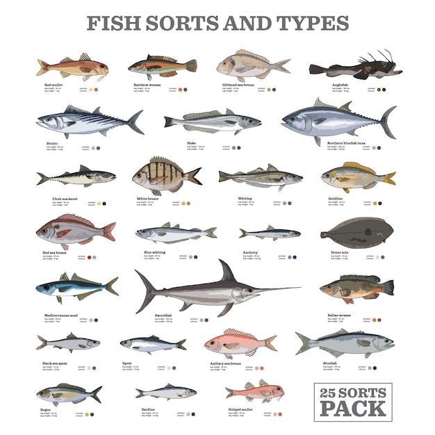 魚の種類と種類 Premiumベクター