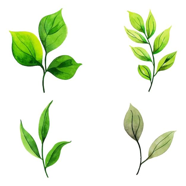 水彩画の葉のコレクション Premiumベクター