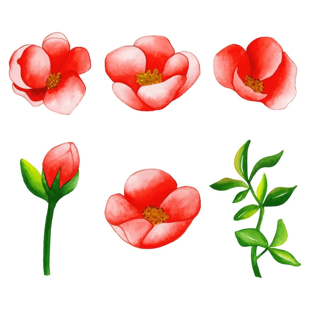 水彩花と葉のコレクション Premiumベクター