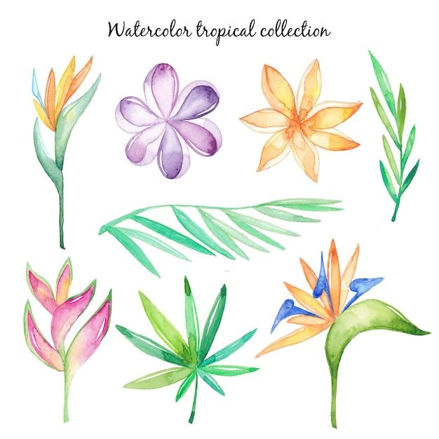 Акварельные тропические цветы и листья Premium векторы