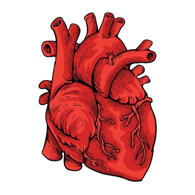 Иллюстрация сердца с стилем гравировки Premium векторы