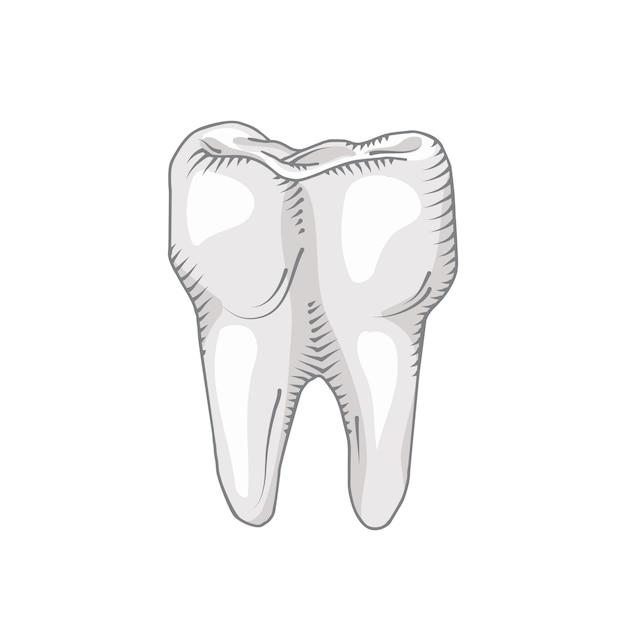 歯は白い背景で隔離されています。歯科、医療、健康コンセプト 無料ベクター