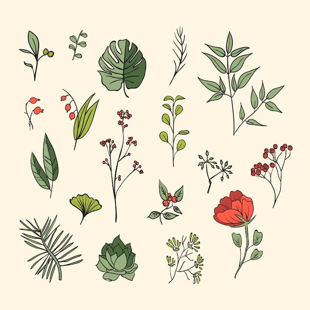 植物とハーブのアイコンが設定されています。デザインや招待状の要素 無料ベクター
