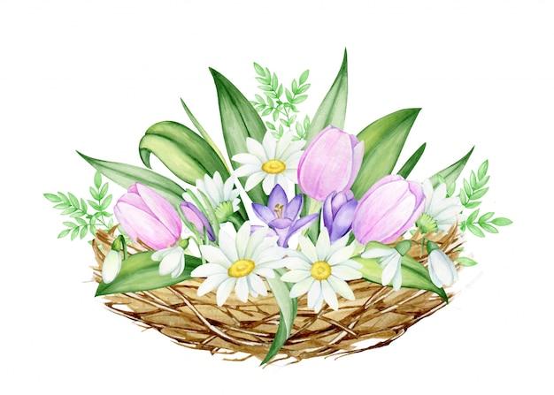 Букет цветов, из ромашек, тюльпанов, подснежников, крокусов в гнезде. акварель, весна картинки, на изолированных фоне, на праздник пасхи. Premium векторы