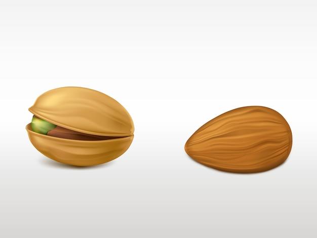 白い背景に分離された現実的な非常に詳細なナッツのセットです。 無料ベクター