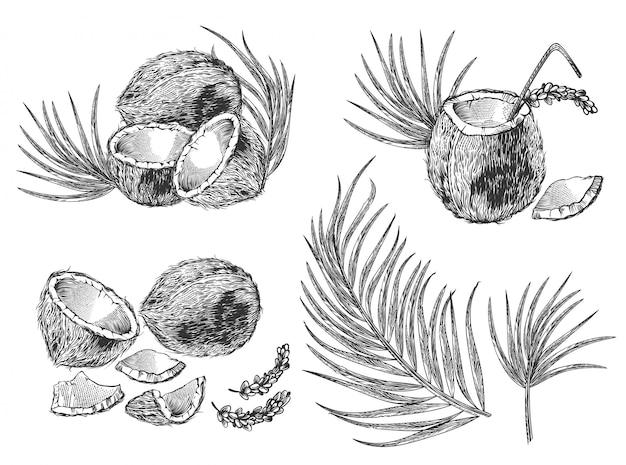 ココナッツ、ヤシの葉、カクテルの刻まれたイラストセット 無料ベクター