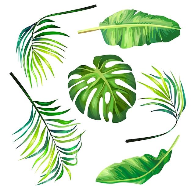 熱帯ヤシの植物的なベクトルイラストのセットは、現実的なスタイルで葉。 無料ベクター
