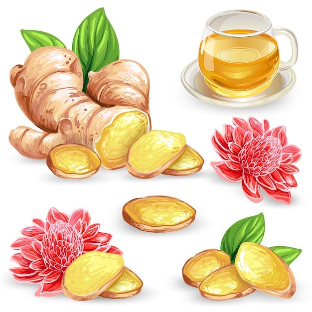 Установите векторные иллюстрации свежий корень имбиря, нарезанный, цветок и имбирный чай. Бесплатные векторы