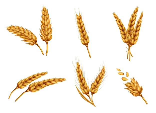 金の小麦の耳と穀物の現実的なベクトルセット 無料ベクター