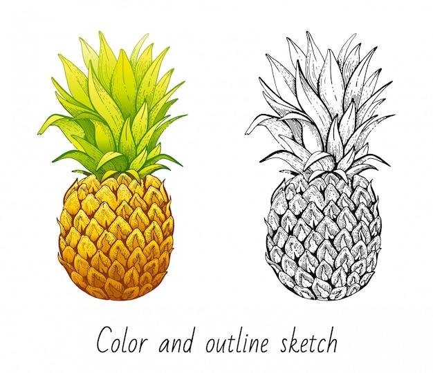 色とアウトラインスケッチパイナップルセット Premiumベクター