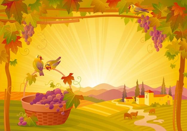 美しい秋の風景。ブドウ、ブドウ園、バスケット、鳥のある田舎の秋。感謝祭とワインフェスティバルのベクトル図 Premiumベクター