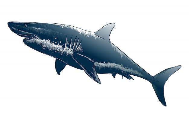 Изолированный чертеж акулы в голубом цвете. Premium векторы