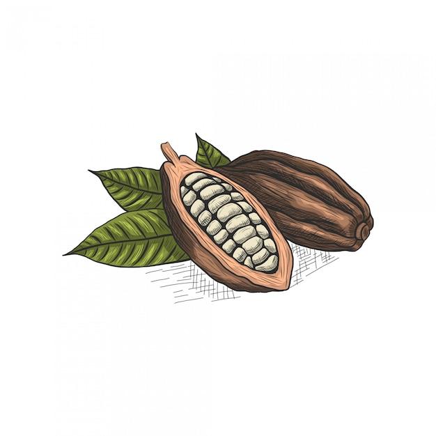 チョコレートと葉の手描き Premiumベクター