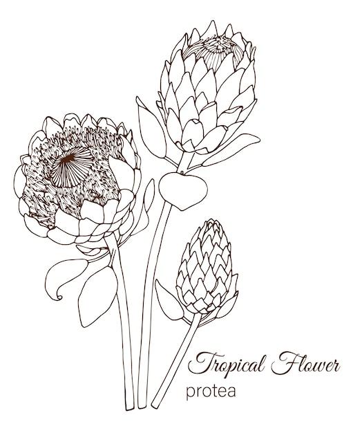 Ручной обращается тропические цветы Premium векторы