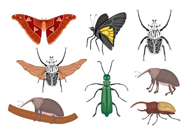 Набор тропических насекомых. ручной обращается цветной атлас моли, долгоносика, бабочки, голиафа, жук-геркулес, испанская муха. красочная милая коллекция тропических ошибок. Premium векторы