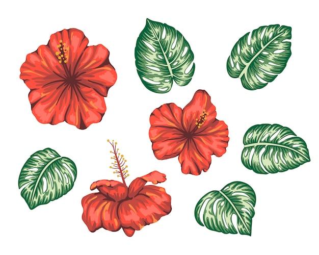 モンステラと熱帯のハイビスカスのイラストを分離しました。明るくリアルな花。花の熱帯のデザイン要素。 Premiumベクター