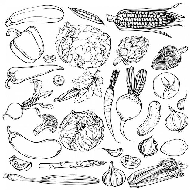 手描きのインクスケッチ。さまざまな野菜のセット。 Premiumベクター