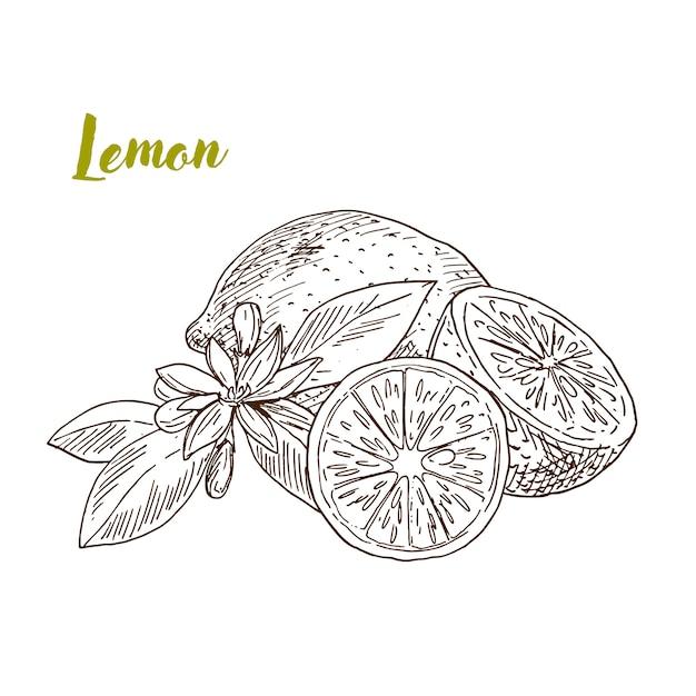 Рисованной лимоны, ломтик и цветок Premium векторы