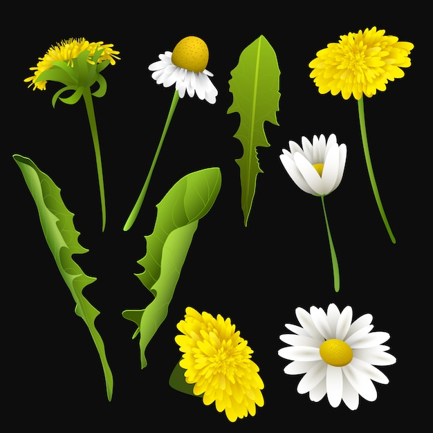 Набор реалистичных весенних или летних цветов и листьев Premium векторы