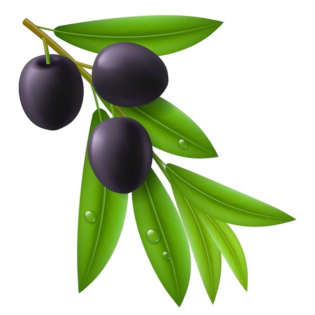 Ветка оливкового дерева со спелыми маслинами Premium векторы